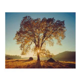 Impression Sur Bois Réserve forestière noire des chênes | Cleveland,