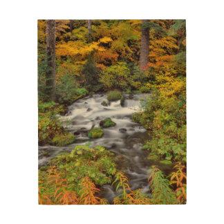 Impression Sur Bois Rivière par la forêt, automne, Orégon