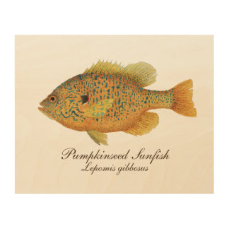 Impression Sur Bois Sunfish de Pumpkinseed