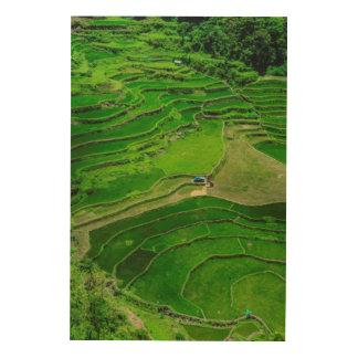 Impression Sur Bois Terrasses vertes de riz, Philippines
