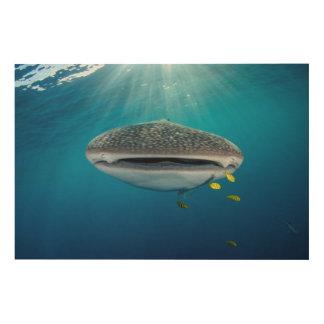 Impression Sur Bois Tête d'un requin de baleine