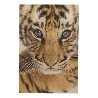 Impression Sur Bois Tigre CUB