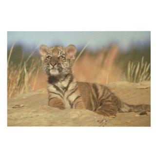 Impression Sur Bois Tigre sibérien