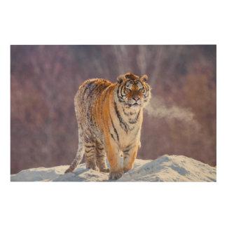 Impression Sur Bois Tigre sibérien dans la neige, Chine