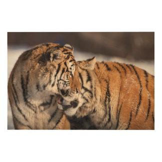 Impression Sur Bois Tigres montrant l'affection