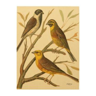 Impression Sur Bois Trois oiseaux domestiques étés perché sur une