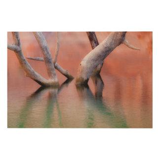 Impression Sur Bois Troncs morts de peuplier dans le lac | Utah