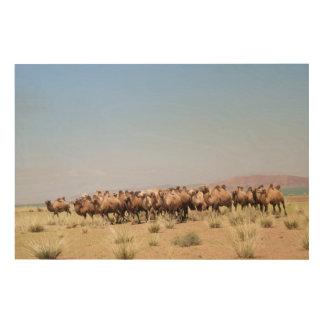Impression Sur Bois Troupeau de chameaux Bactrian