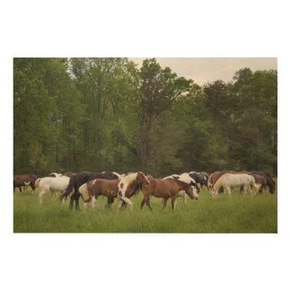 Impression Sur Bois Troupeau de chevaux, Tennessee