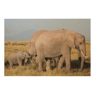 Impression Sur Bois Troupeau d'éléphant avec des jeunes