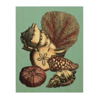 Impression Sur Bois Turquoise Shell et collection de corail rouge