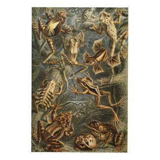 Impression Sur Bois Variété d'Ernst Haeckel de grenouilles exotiques :