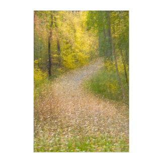 Impressions En Acrylique Arbres dans des couleurs d'automne et la voie