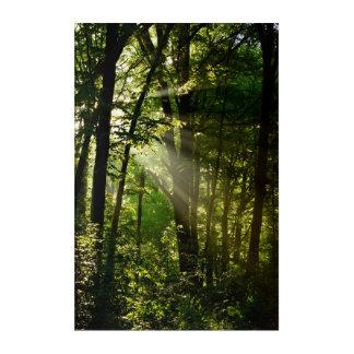 Impressions En Acrylique Beaux rayons de soleil dans la forêt d'été de
