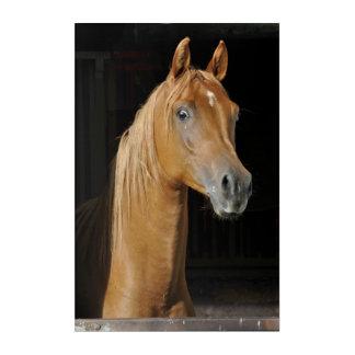 Impressions En Acrylique Bel Arabe de pur sang dans la stalle