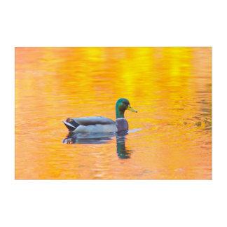 Impressions En Acrylique Canard de Mallard sur le lac orange, Canada