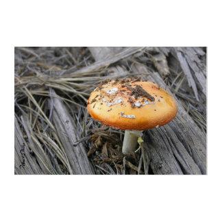 Impressions En Acrylique Champignon coloré éclatant par la photo de paille