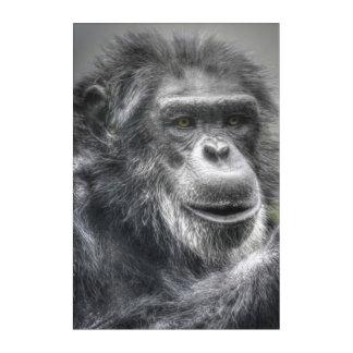 Impressions En Acrylique Chimpanzé