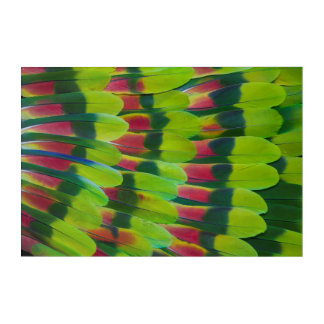 Impressions En Acrylique Conception de plume de vert de perroquet d'Amazone