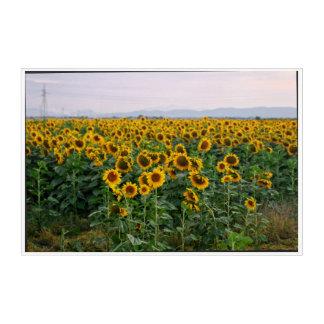 Impressions En Acrylique Coucher du soleil Toscane Italie de tournesols