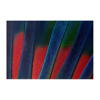 Impressions En Acrylique Détail Bleu-Dirigé de plume de perroquet