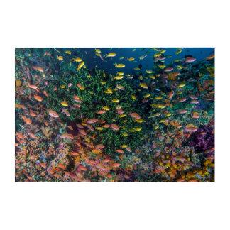 Impressions En Acrylique Écoles de bain de poissons en récif