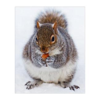 Impressions En Acrylique Écureuil mignon mangeant un écrou dans la neige