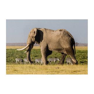 Impressions En Acrylique Éléphant et zèbres au point d'eau