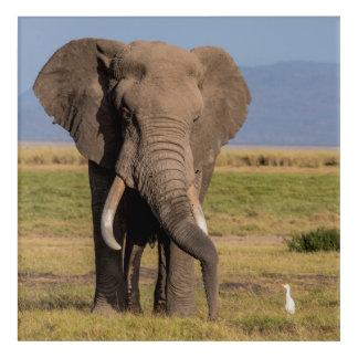 Impressions En Acrylique Éléphant recherchant le Groung