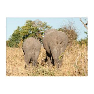 Impressions En Acrylique Éléphants marchant loin