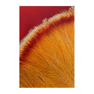 Impressions En Acrylique Fermez-vous de la plume orange