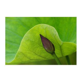 Impressions En Acrylique Feuille et bourgeon | la Caroline du Nord de Lotus