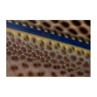 Impressions En Acrylique Fin de plume de faisan d'Argus