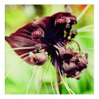Impressions En Acrylique Fleur de batte