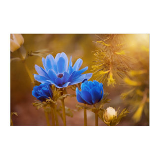 Impressions En Acrylique Fleurs bleues de fleur d'anémone