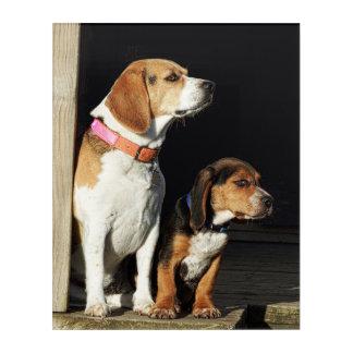 Impressions En Acrylique Grande soeur de beagle et beagle de petit frère