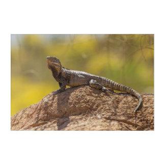 Impressions En Acrylique iguane Épineux-coupé la queue sur la roche