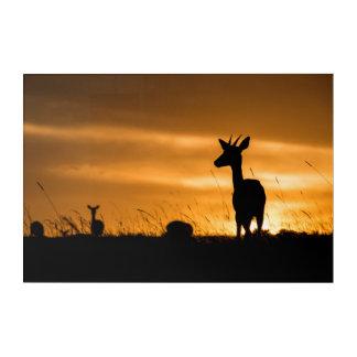 Impressions En Acrylique Impala au coucher du soleil