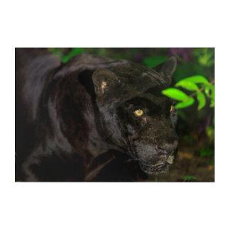 Impressions En Acrylique Jaguar noir rôdant