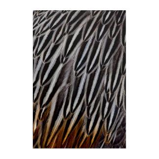 Impressions En Acrylique Le coq de jungle fait varier le pas du plan