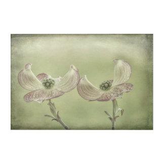 Impressions En Acrylique Le plan rapproché du cornouiller rose fleurit |