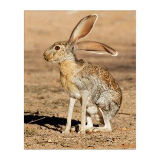 Impressions En Acrylique Lièvre d'antilope