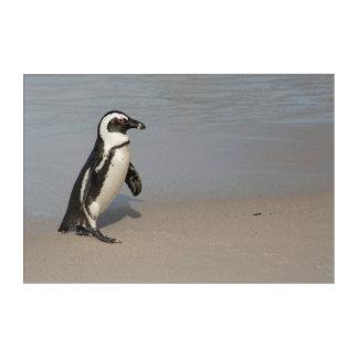 Impressions En Acrylique Marche africaine de pingouin