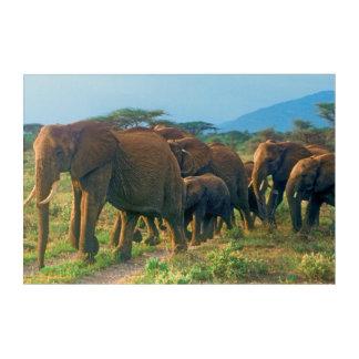Impressions En Acrylique Marche de troupeau d'éléphant