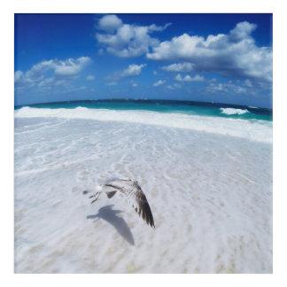 Impressions En Acrylique Mouette de vol à la plage