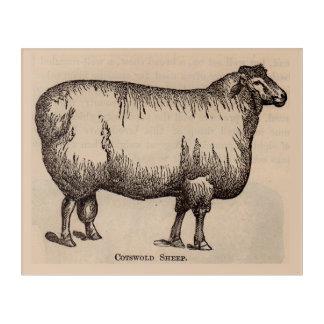 Impressions En Acrylique Moutons du 19ème siècle de Cotswold d'impression