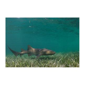 Impressions En Acrylique Natation de requin d'infirmière