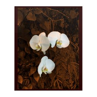Impressions En Acrylique Orchidées blanches élégantes sur le backgroun