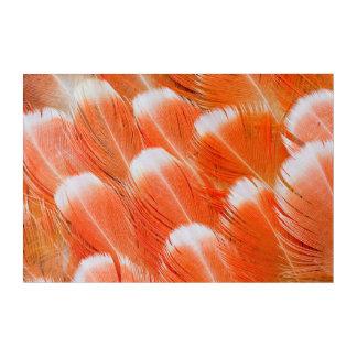 Impressions En Acrylique Plumes de Cocatoo colorées par pêche