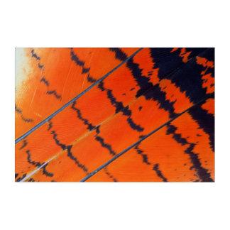 Impressions En Acrylique Plumes oranges et noires de cacatoès